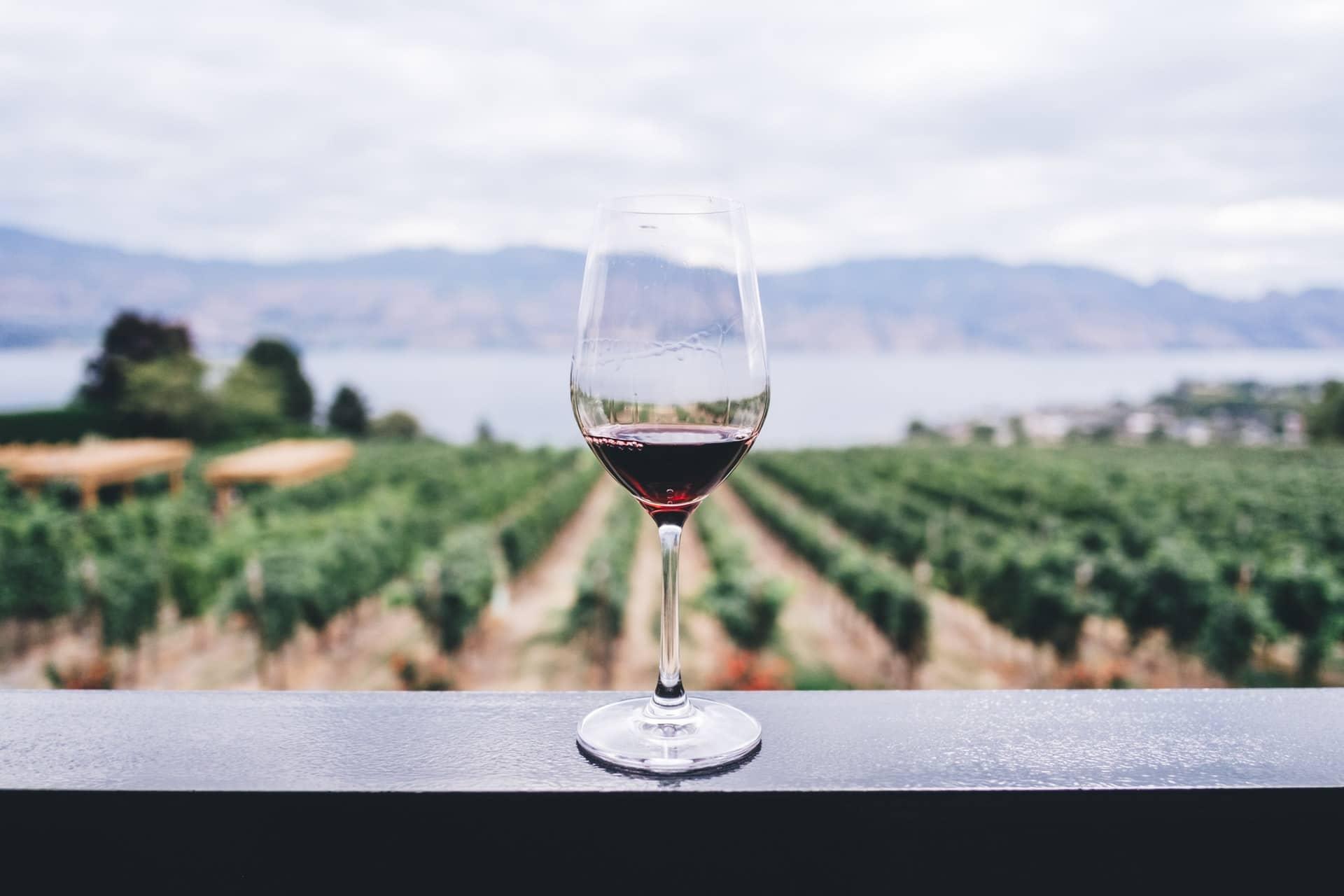 Tourisme et vin